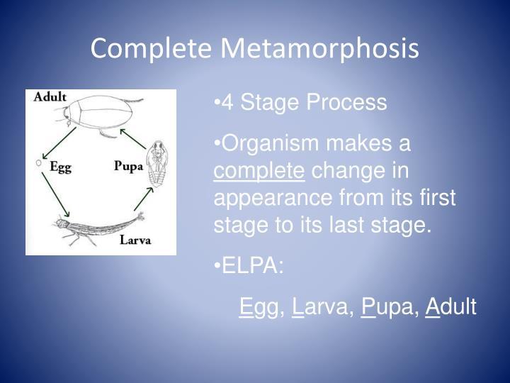 Complete Metamorphosis