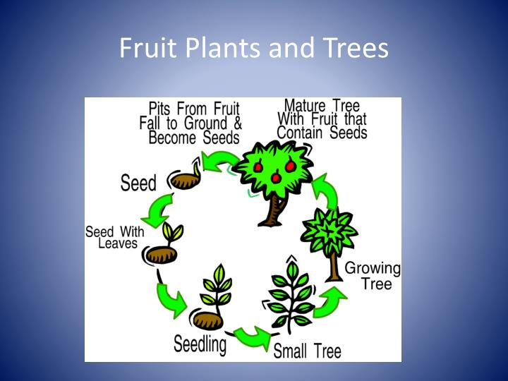 Fruit Plants and Trees