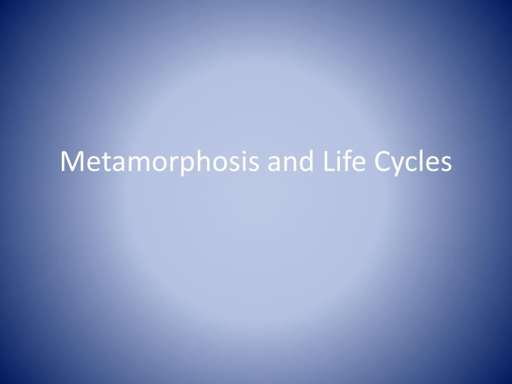 Metamorphosis and life cycles