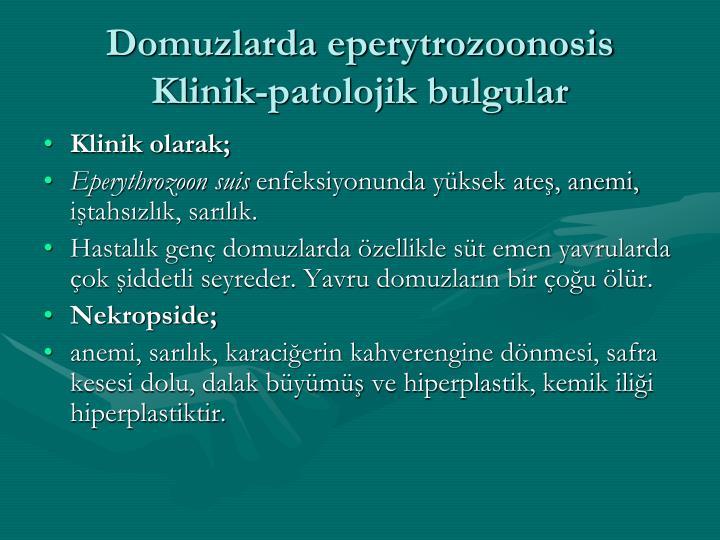 Domuzlarda eperytrozoonosis