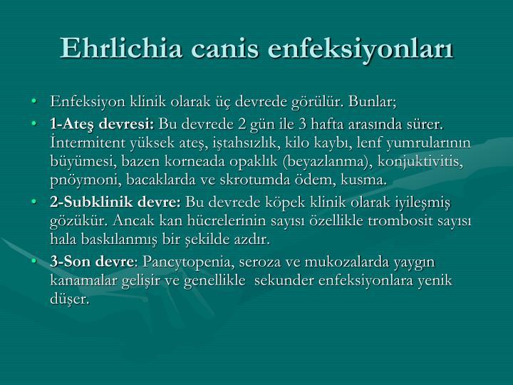 Ehrlichia canis enfeksiyonları