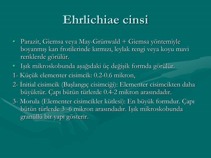 Ehrlichiae cinsi