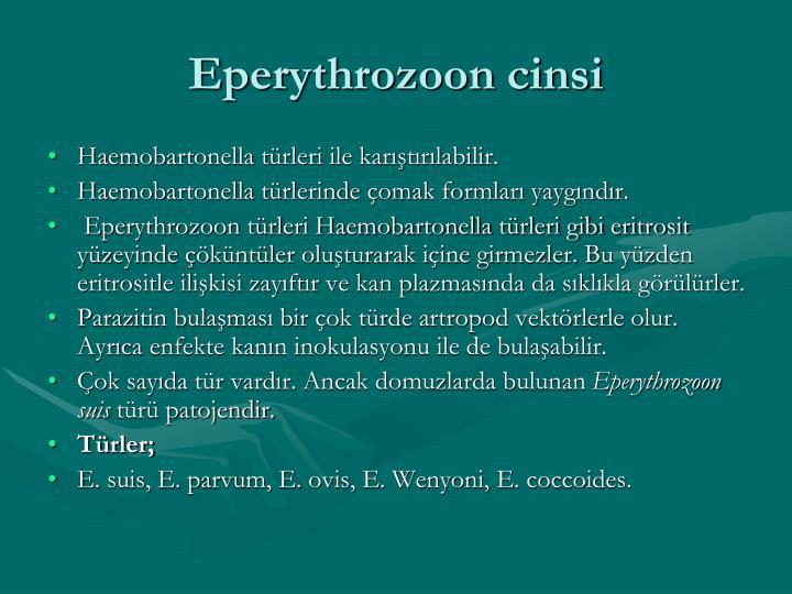 Eperythrozoon cinsi