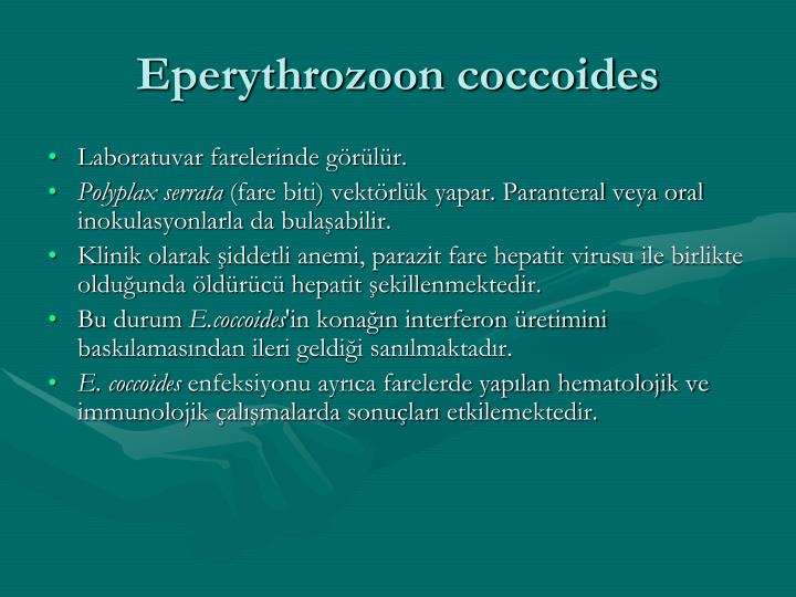 Eperythrozoon coccoides