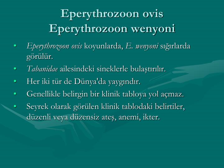 Eperythrozoon ovis