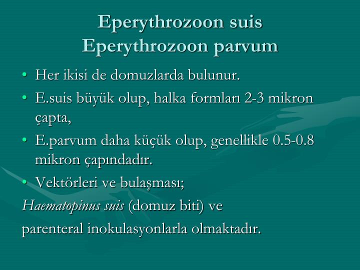Eperythrozoon suis