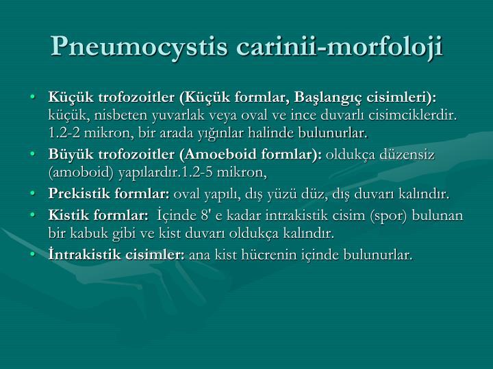 Pneumocystis carinii-morfoloji
