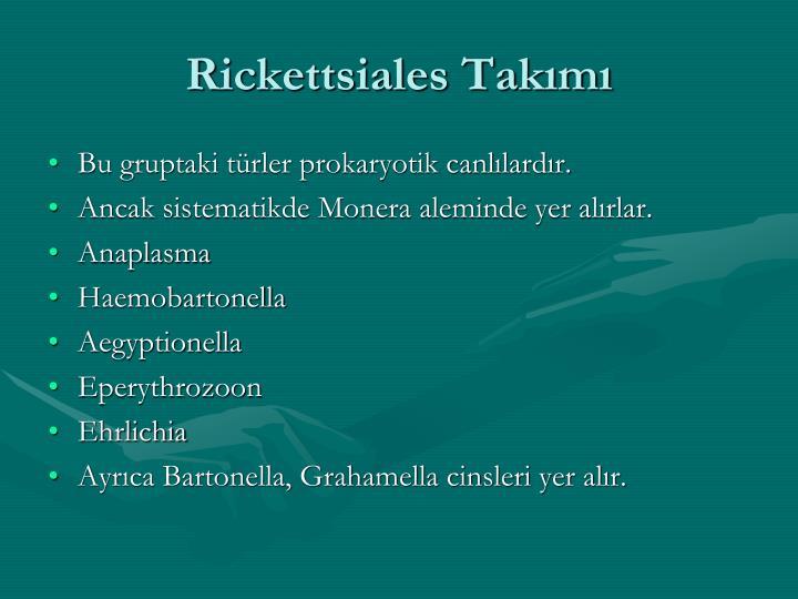 Rickettsiales Takımı