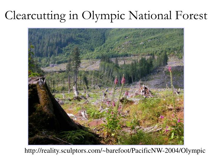 Clearcutting in Olympic National Forest