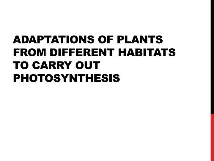 Adaptations of plants from different habitats to carry out photosynthesis