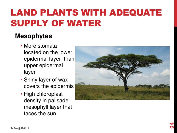 Land plants with adequate supply of water