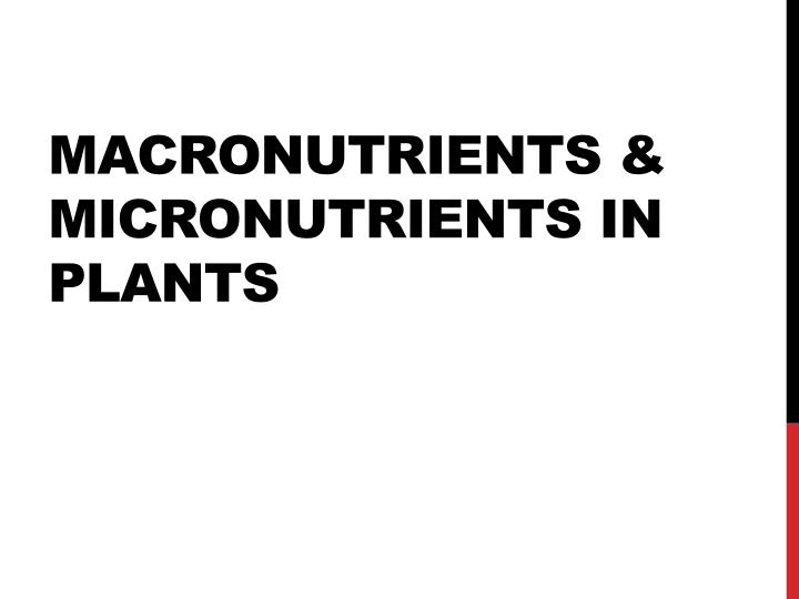 Macronutrients micronutrients in plants
