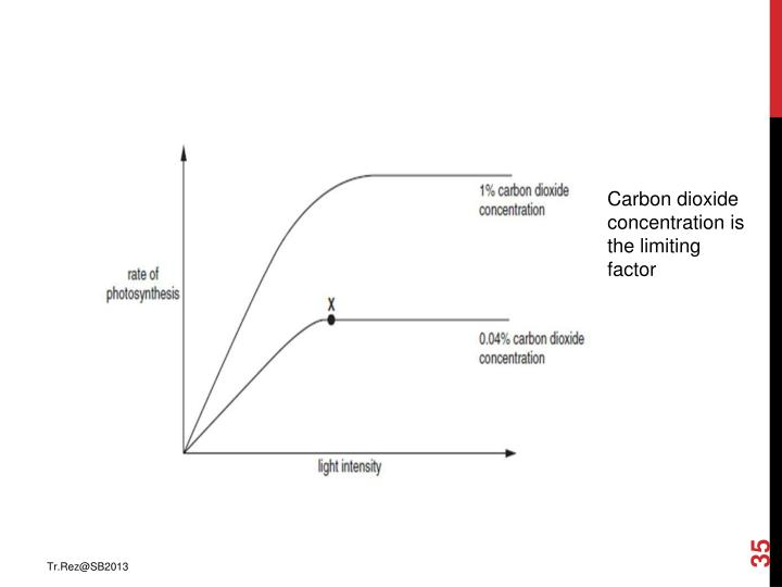 Carbon dioxide concentration is the limiting factor