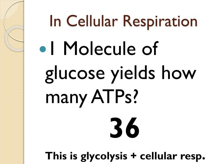 In Cellular Respiration