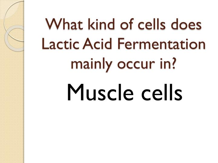 What kind of cells does Lactic Acid Fermentation mainly occur in?