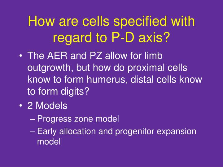 How are cells specified with regard to P-D axis?