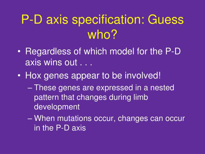 P-D axis specification: Guess who?