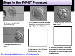 steps in the ivf et processes