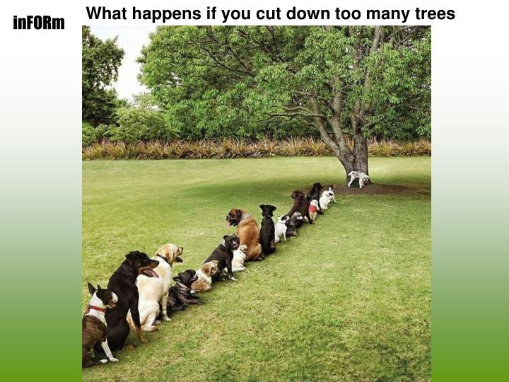 What happens if you cut down too many trees