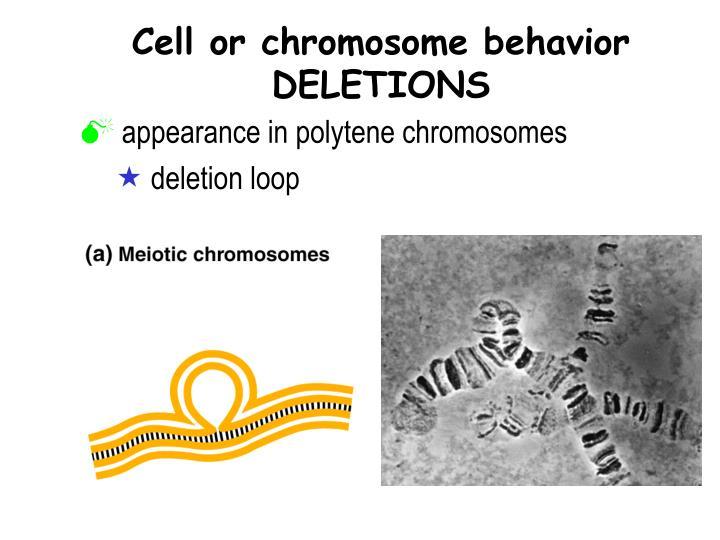 Cell or chromosome behavior DELETIONS