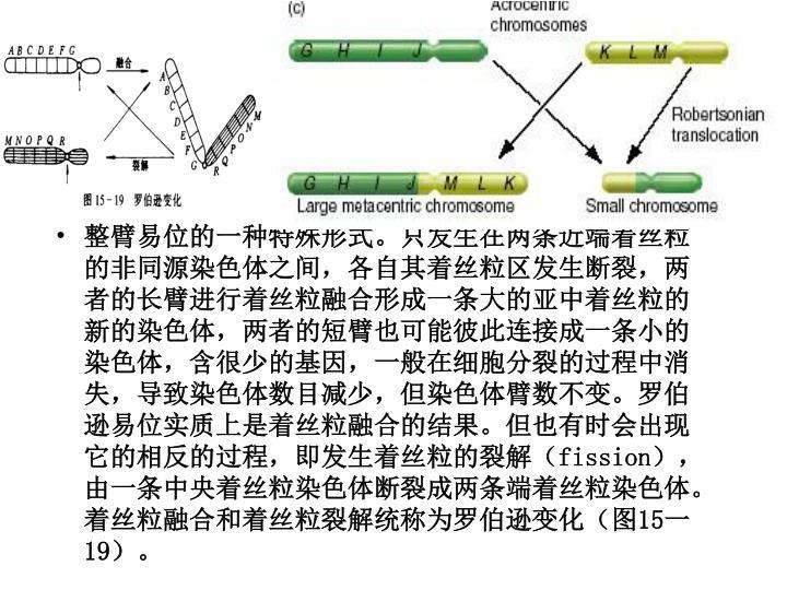 整臂易位的一种特殊形式。只发生在两条近端着丝粒的非同源染色体之间,各自其着丝粒区发生断裂,两者的长臂进行着丝粒融合形成一条大的亚中着丝粒的新的染色体,两者的短臂也可能彼此连接成一条小的染色体,含很少的基因,一般在细胞分裂的过程中消失,导致染色体数目减少,但染色体臂数不变。罗伯逊易位实质上是着丝粒融合的结果。但也有时会出现它的相反的过程,即发生着丝粒的裂解(
