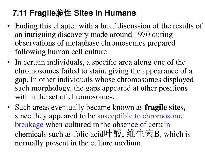 7.11 Fragile