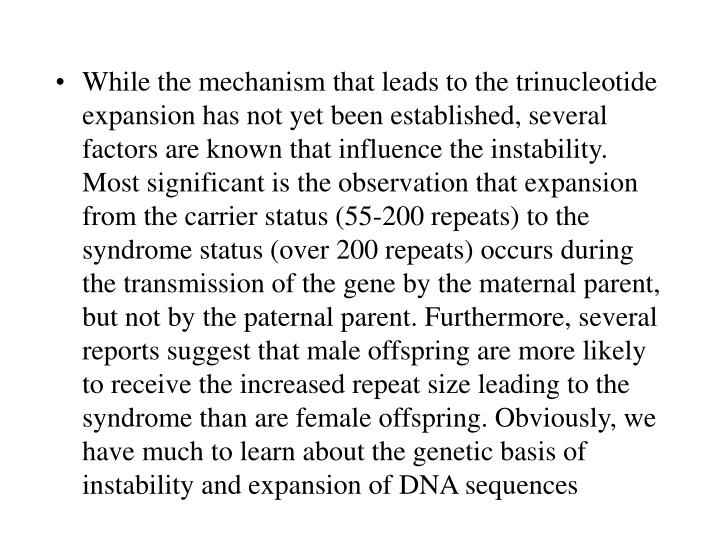 While the mechanism that leads to the trinucleotide expansion has not yet been established, several factors are known that influence the instability. Most significant is the observation that expansion from the carrier status (55-200 repeats) to the syndrome status (over 200 repeats) occurs during the transmission of the gene by the maternal parent, but not by the paternal parent. Furthermore, several reports suggest that male offspring are more likely to receive the increased repeat size leading to the syndrome than are female offspring. Obviously, we have much to learn about the genetic basis of instability and expansion of DNA sequences