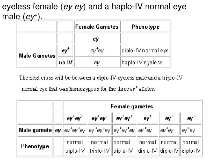 eyeless female (
