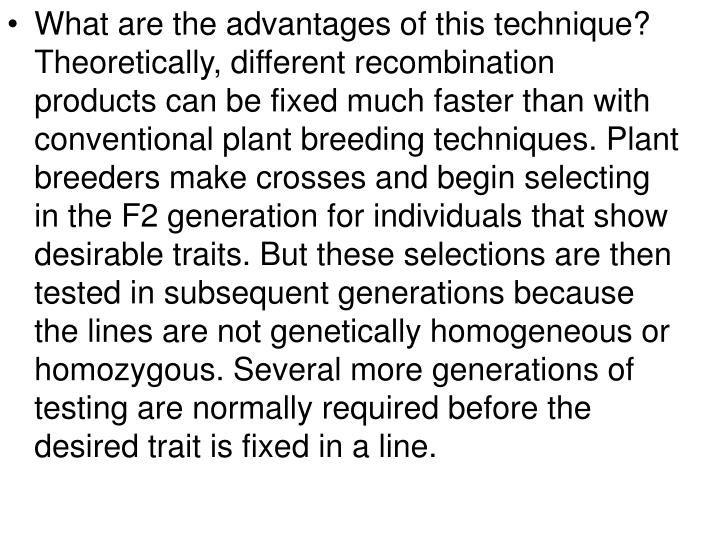 What are the advantages of this technique? Theoretically, different recombination products can be fixed much faster than with conventional plant breeding techniques. Plant breeders make crosses and begin selecting in the F2 generation for individuals that show desirable traits. But these selections are then tested in subsequent generations because the lines are not genetically homogeneous or homozygous. Several more generations of testing are normally required before the desired trait is fixed in a line.