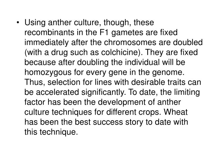Using anther culture, though, these recombinants in the F1 gametes are fixed immediately after the chromosomes are doubled (with a drug such as colchicine). They are fixed because after doubling the individual will be homozygous for every gene in the genome. Thus, selection for lines with desirable traits can be accelerated significantly. To date, the limiting factor has been the development of anther culture techniques for different crops. Wheat has been the best success story to date with this technique.