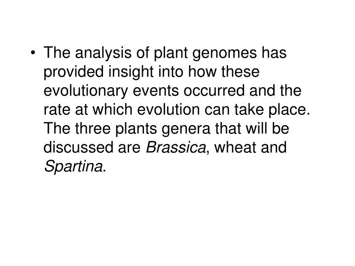 The analysis of plant genomes has provided insight into how these evolutionary events occurred and the rate at which evolution can take place. The three plants genera that will be discussed are