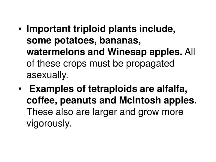 Important triploid plants include, some potatoes, bananas, watermelons and Winesap apples.