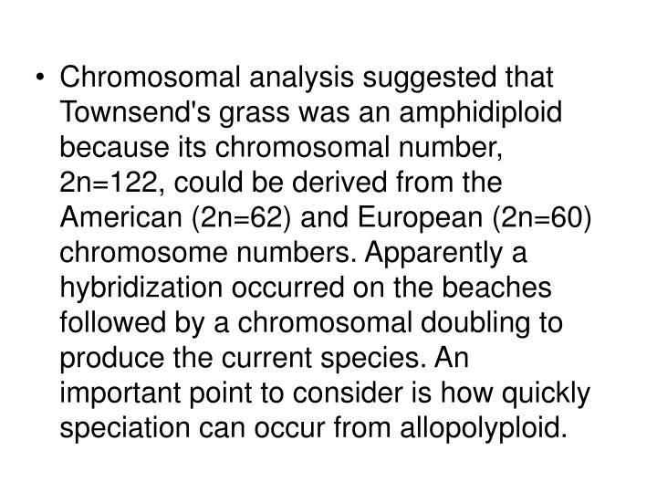 Chromosomal analysis suggested that Townsend's grass was an amphidiploid because its chromosomal number, 2n=122, could be derived from the American (2n=62) and European (2n=60) chromosome numbers. Apparently a hybridization occurred on the beaches followed by a chromosomal doubling to produce the current species. An important point to consider is how quickly speciation can occur from allopolyploid.