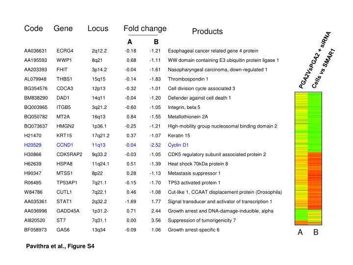 PGA2VsPGA2 + siRNA
