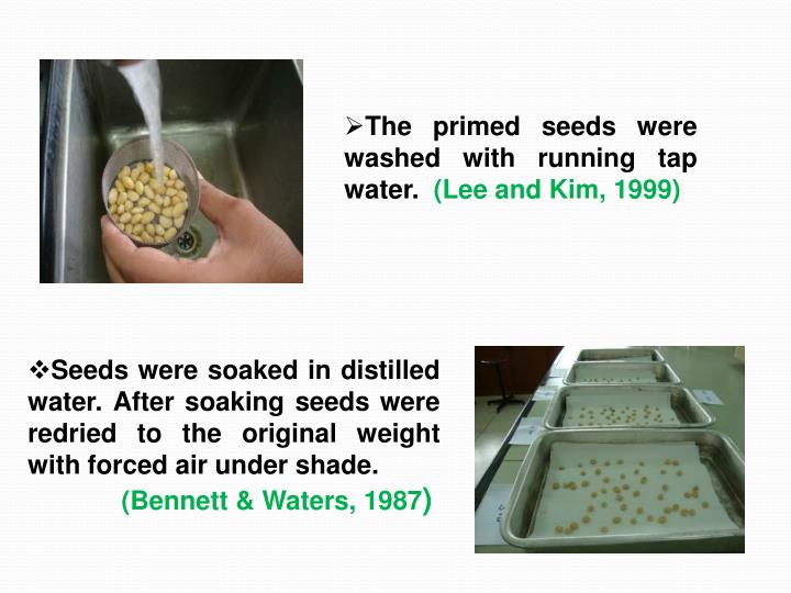 The primed seeds were washed with running tap water.