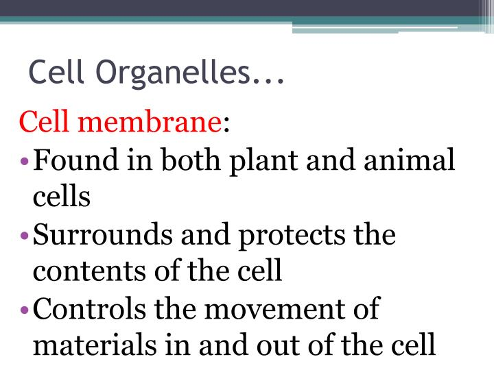 Cell Organelles...