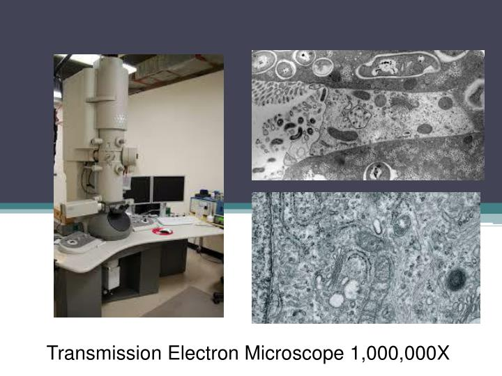 Transmission Electron Microscope 1,000,000X