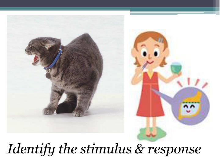 Identify the stimulus & response