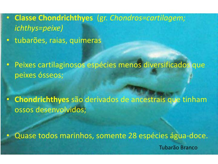 Classe Chondrichthyes