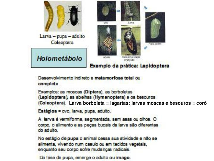 Larva borboleta = lagartas; larvas moscas e besouros = coró