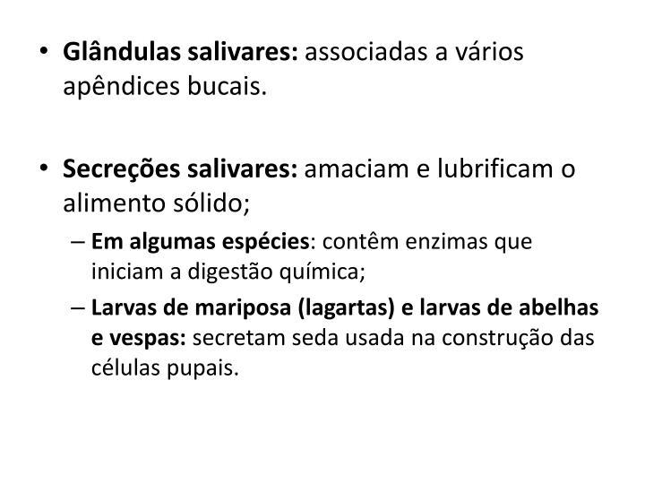 Glândulas salivares: