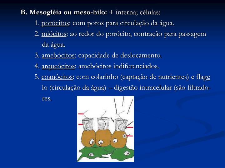B. Mesogléia ou meso-hilo:
