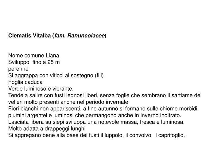Clematis Vitalba (