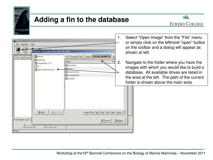 Adding a fin to the database