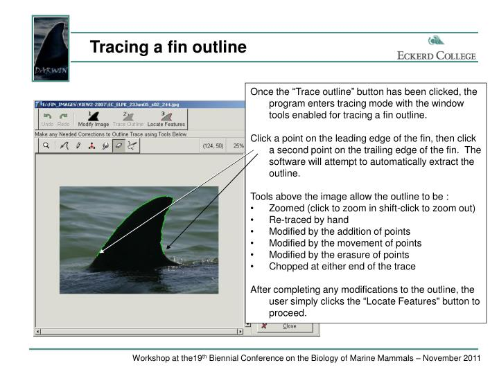 Tracing a fin outline