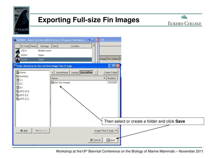 Exporting Full-size Fin Images