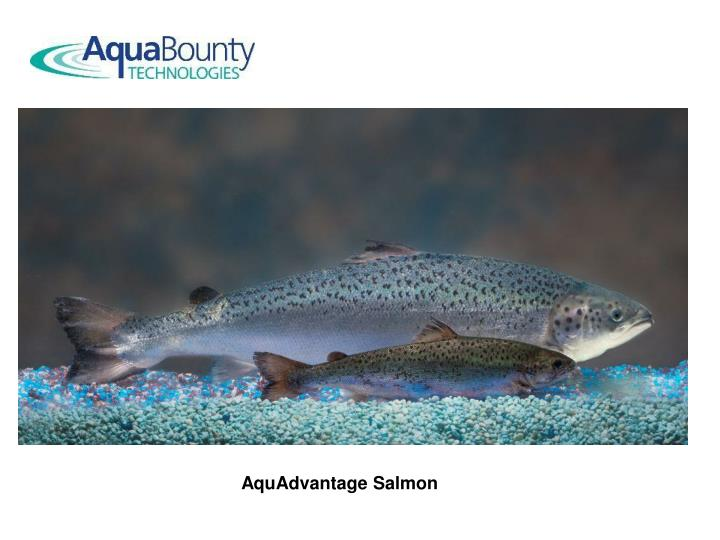 AquAdvantage Salmon