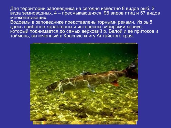 Для территории заповедника на сегодня известно 8 видов рыб, 2 вида земноводных, 4 – пресмыкающихся, 98 видов птиц и 57 видов млекопитающих.