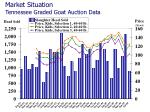 market situation tennessee graded goat auction data