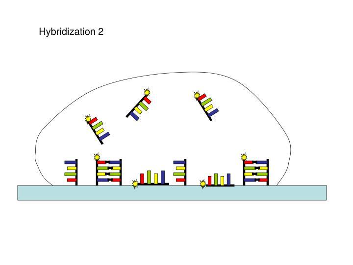 Hybridization 2
